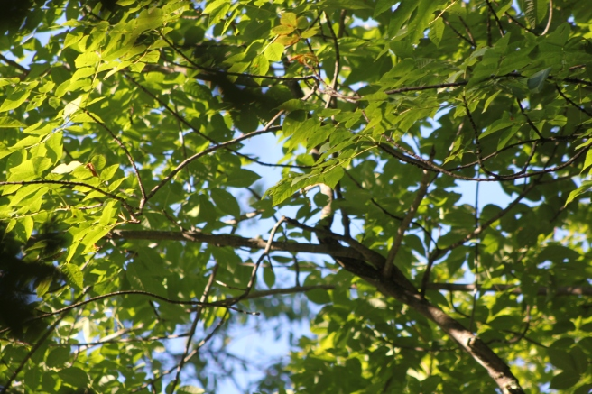 blue sky intertwined branches.JPG
