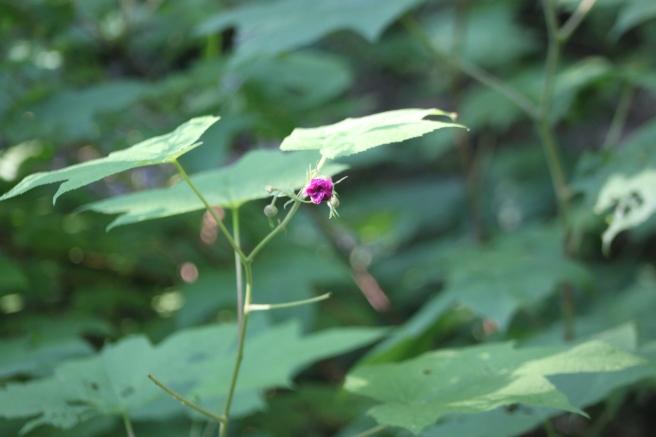 tiny pink bud
