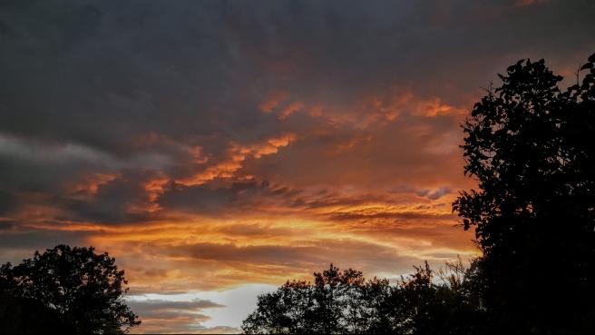 ORANGE SKY 7 2016