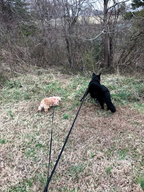chief and abby exploring at their new house
