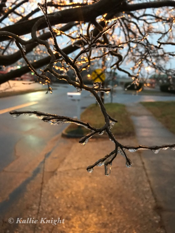 crispy ice on the branches statesvile nc