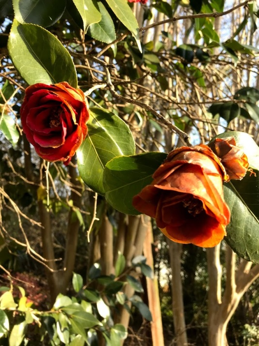 orangeflowersfromghehauntedhouse
