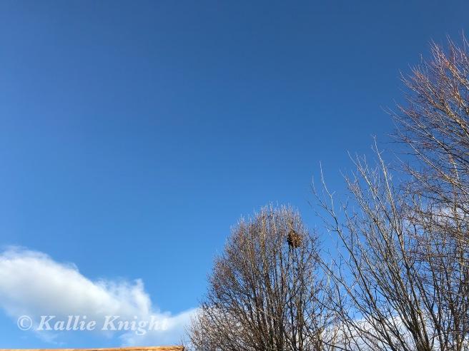 blue skies 15.19
